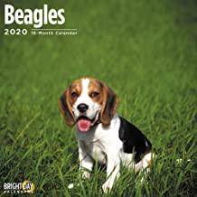 Dog Humor Beagle I/'ll Be Watching You Refrigerator Magnet